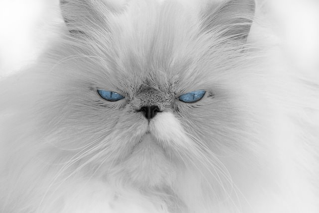 ムスッとする猫